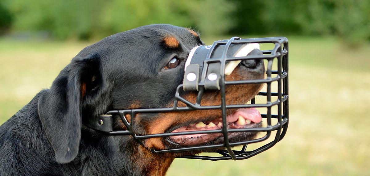Muselière pour chien en cuir, nylon, plastique, métallique