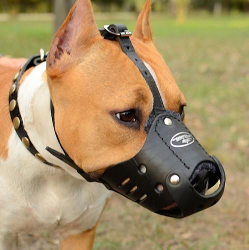 Museliere cuir pas cher pour chien m51 - Site pour chien pas cher ...