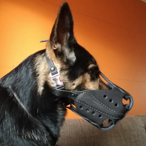Muselière de frappe pour chien a vendre - M56