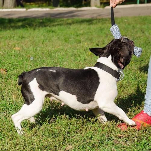 Boudin de rappel pour dressage chien - TE32 20×4 (FL)