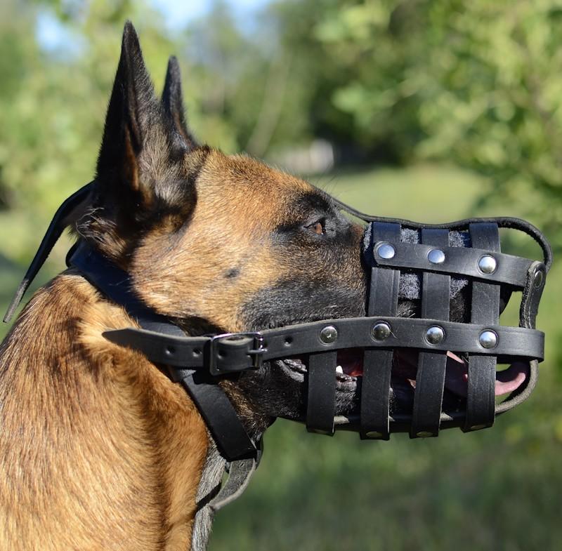 Museliere panier en cuir pour chien Malinois - M41