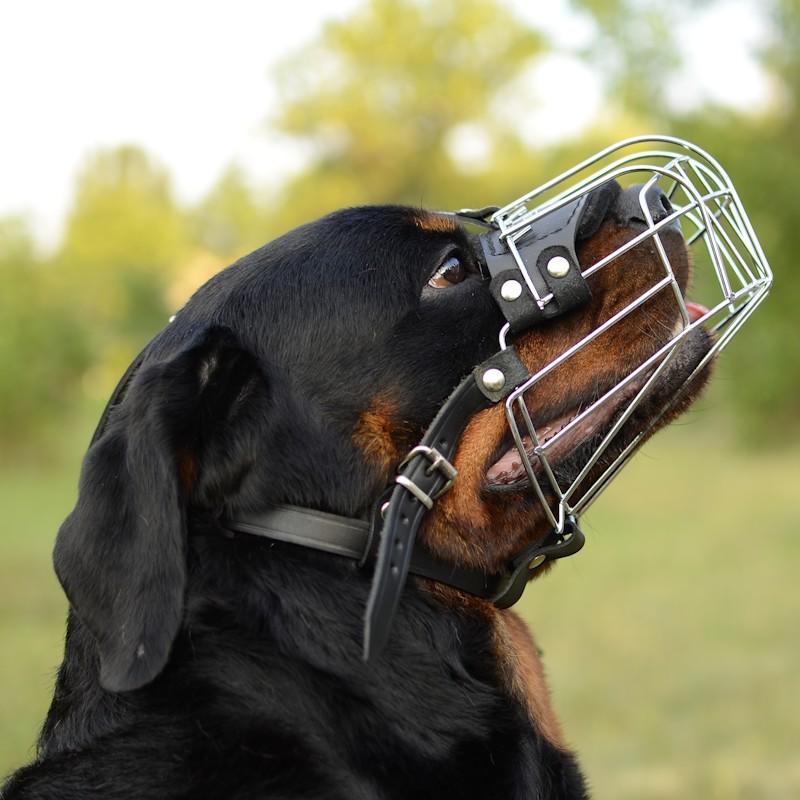 Museli re m tallique pas cher au chien type rottweiler m4 r1 - Site pour chien pas cher ...