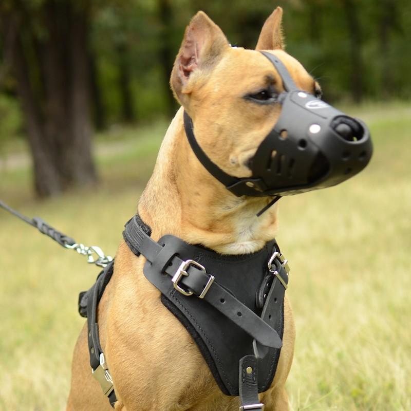 Museli re en cuir d 39 usage polyfonctionnel pour chien pitbull m51 - Fabriquer un harnais pour chien ...